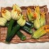 世田谷育ちのズッキーニを収穫させていただきました♡の画像