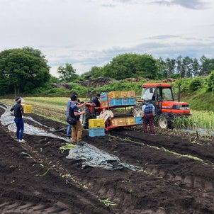 2020収穫終了&収録の画像