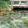 モネの池に☆の画像