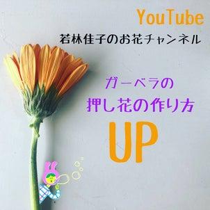 【動画レッスン】人気のお花ガーベラの押し花の作り方の画像
