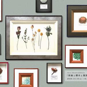 chicu. 4th solo exhibition 「原画と標本と額装」開催のお知らせの画像