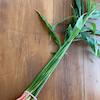 葉生姜レシピの画像