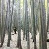 鎌倉・金沢街道沿いの寺めぐりの画像