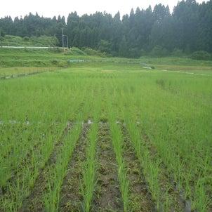 そして、草刈りの画像