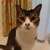 猫ブログスタート!の画像