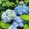 花いっぱい。の画像