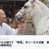 【ポニーの神馬と葛飾の熊野神社】の画像