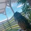 大型フクロウは外で寝れるの画像