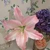 ピンクカサブランカ♡4連休は家事時間を計測 見直す良い機会に!の画像