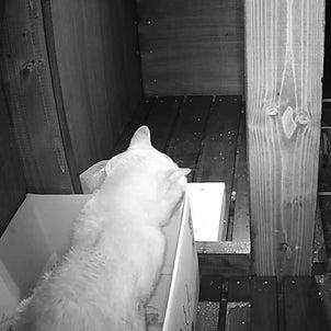 猫にも心の闇があるようですの画像