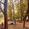 募集☆9/11 環境先進国スウェーデン✖️春夏秋冬のおさんぽ会の画像