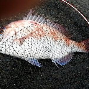 今年初ソロ釣行の画像