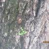 空蝉とトマトの画像