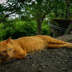 Stray Cat Jimmyの画像