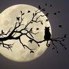 満月と新しい改革が進む時に個人はどうする?の画像