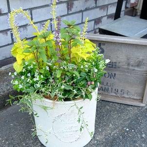 8月のお花たちの画像