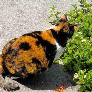 """""""8月8日は「世界猫の日」「蝶々の日」撮りためた中からネコ と チョウチョを""""の画像"""