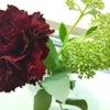 お花の観察2日目の画像