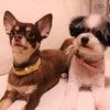 いぬブログ 〜愛犬たちの紹介〜の画像