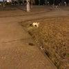 昨日の色々、行方不明の猫ちゃん発見!の画像