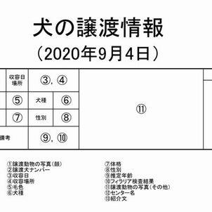 茨城センター 犬の譲渡情報(2020年9月) ※2020/9/4更新 ~高齢犬の収容が増えましたの画像