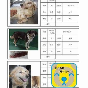 茨城センター 犬猫収容情報  8/17~8/31までの画像