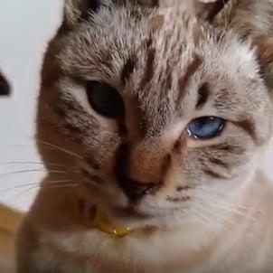 涙目のコトラwww なんで泣いてるの!?の画像