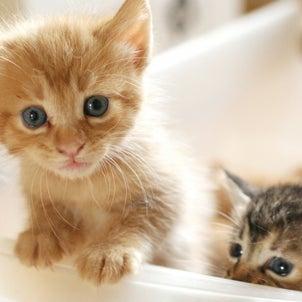 子猫のもふもふ動画に大ハマり。なんでこんなにキュンとなるんだろうの画像