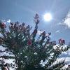 秋のにほひ♡諏訪大社上社前宮から神長官守矢家のお庭へ♡の画像