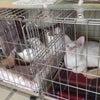 【9月12日】本日の保護猫譲渡会の画像