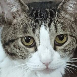 カラスもアライグマも猫を襲うの画像