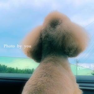 bebe&coco  ┏)´0`(┓  あわてて【お届け弁当】してきました!の画像