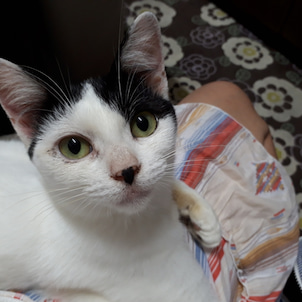 【お膝猫とは私のことよ!夏子です】の画像