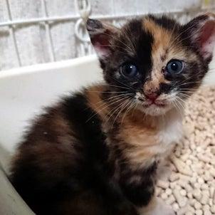 【 コナミちゃんも大好きなロイヤルカナンの仔猫用フードご支援をお願いいたします 】の画像