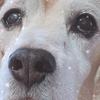 愛犬の健康管理 目の不調で病院へ 薬管理の方法の画像