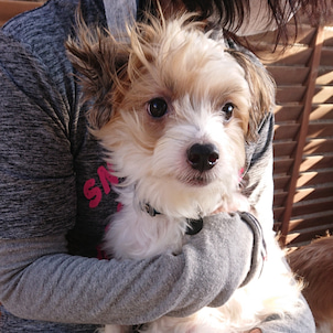 秋風に乗って♪ ~小型犬も里親募集! @ティアハイムの画像