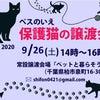 【9月26日】保護猫譲渡会【千葉県柏市】の画像