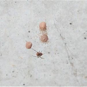 <<閲覧注意>>クモは益虫なので放置していたら…の画像
