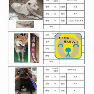 茨城センター 犬猫収容情報  9/1~9/11までの画像