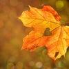 秋にもの悲しい気分になるのは理由があります♡(算命学×量子論的こぼれ話)の画像