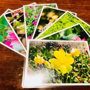 植物からのサポートの画像