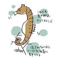 f39c4dbb27bb 竜なの?何なの?不思議だらけのタツノオトシゴ - Ameba News [アメーバ ...