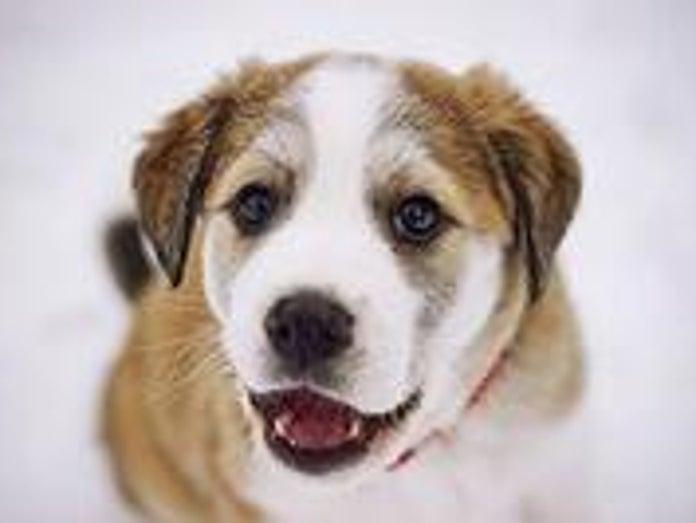 キムタクの犬の種類