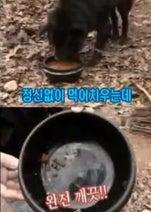 韓国「犬に犬肉を食べさせたらどうなる?」 鬼畜過ぎる番組が過去に放送されてた