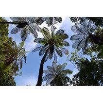 東洋のガラパゴス奄美大島で山・川・海を全て楽しむ旅がしたい!-写真40枚