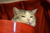 猫が喜ぶ触り方をマスターしておかないと大変なことになる