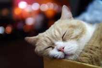 短くても長くてもダメ?睡眠時間とうつ病リスクの関係が明らかに