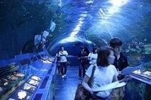東京都・しながわ水族館で、夜の水族館を体感する謎解きゲーム開催