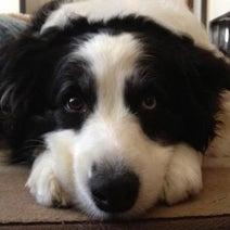 犬が毎朝、顔を舐めて起こしてくれる! これって愛情の証だよね?