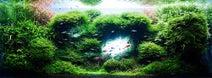 魚が空中を飛んでいる!? 幻想的なアクアスケープを活用したスペシャルムービーを公開